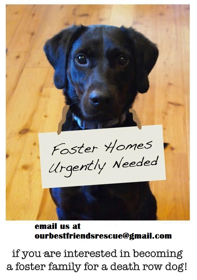 fosters-urgently-needed